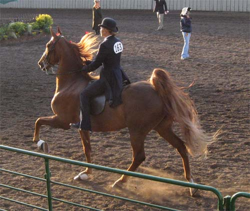 horse show  pictures
