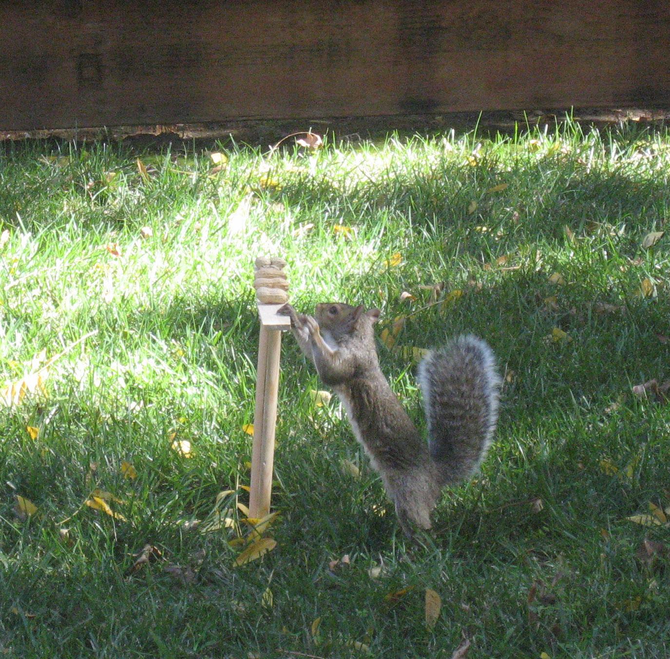squirrel setup log