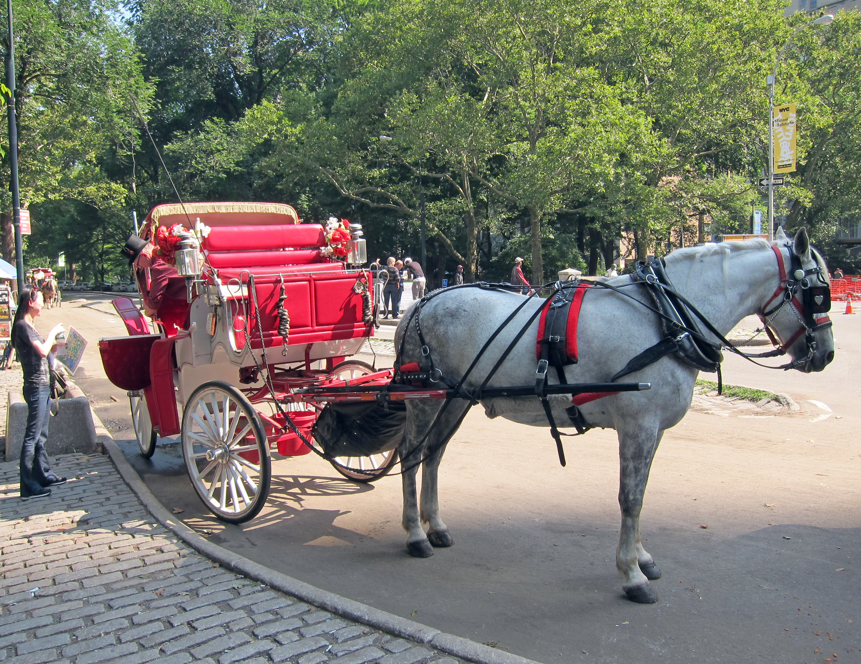 Central Park Nyc Carriage Rides Ride Through Central Park
