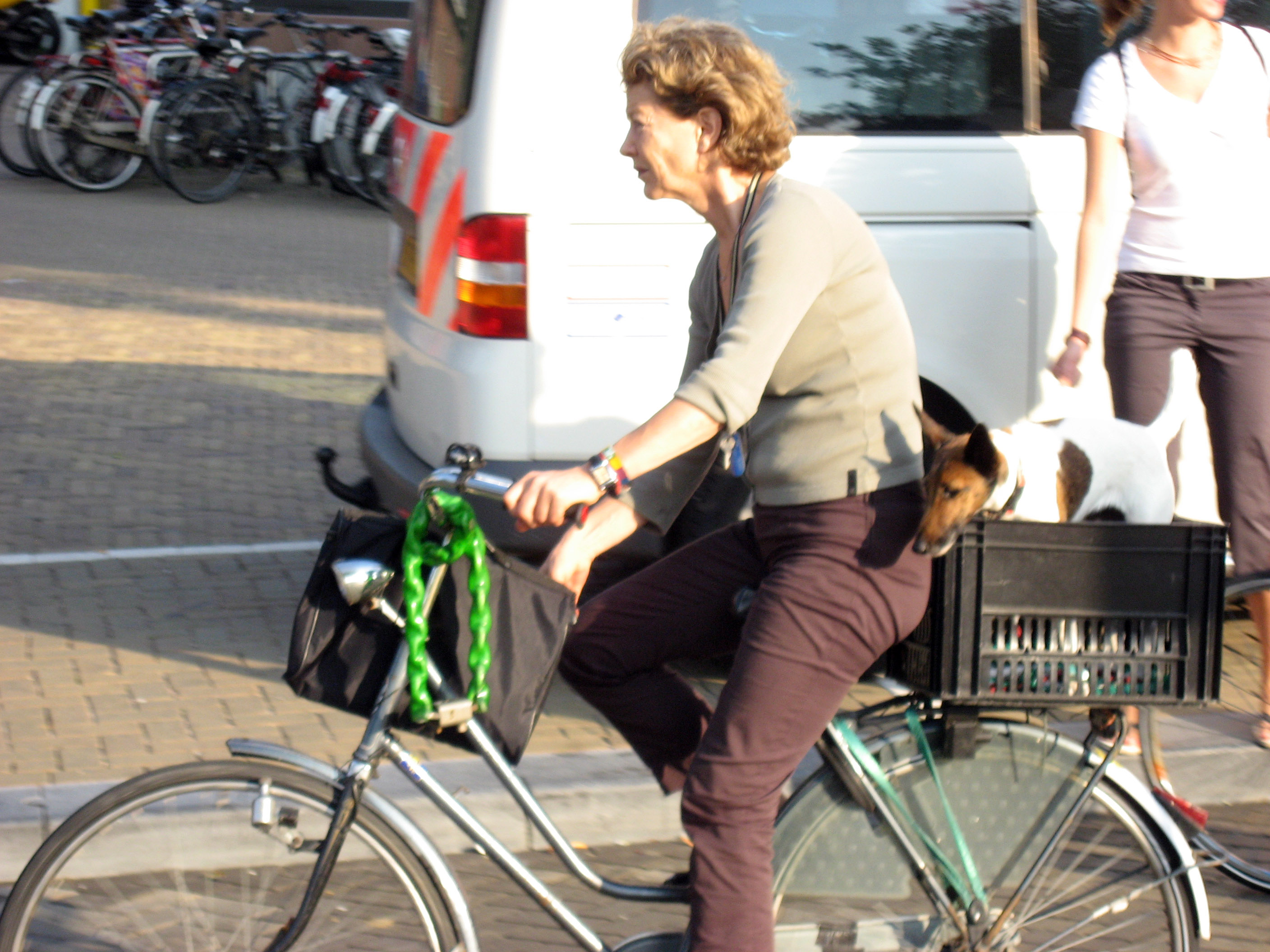 http://www.ski-epic.com/amsterdam_bicycles/pn8b_amsterdam_bicycle_dog.jpg