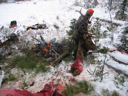 field dressing an elk