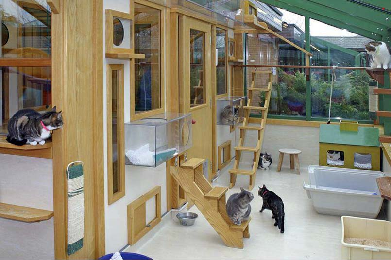 Interesting Cat Trees