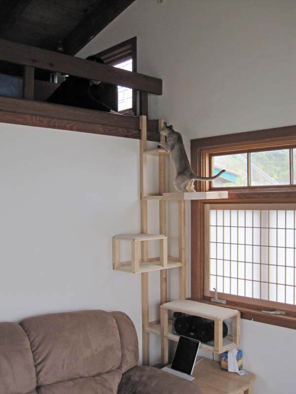 One Was A Kitty Cat Wall Seen Here I Also Designed Tree Myself And Had Cabinet Maker Build It For Corner In My Cur Place